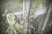Škoda po pozebi v Podravju v sadovnjakih in vinogradih zelo velika