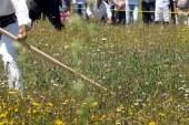 V Oseku v soboto tradicionalno tekmovanje koscev