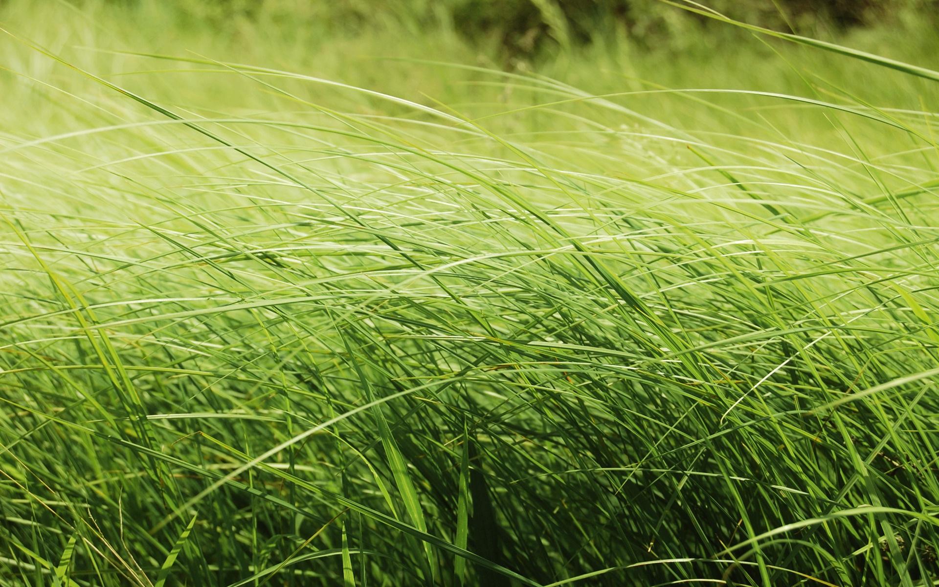 Zaradi slabega vremena veliko travnikov še nepokošenih