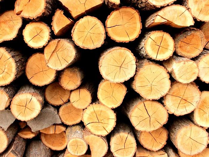 Tatovi odpeljali več podrtih dreves