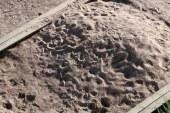 V mariborskem mestnem parku prenovljen otroški peskovnik