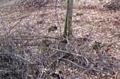 Padel 40 metrov v globel v gozdu in se zagozdil med skalami