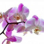 November v Račah mesec orhidej