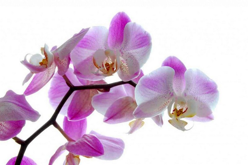 Mesec orhidej v Račah