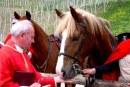 Na Štefanovo blagoslov konj v Pernici