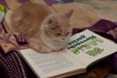 V Lenarški knjižnici, v okviru noči branja zaključek bralne značke za odrasle