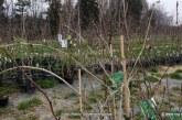Pomlad tudi pravi čas za sajenje sadnega drevja