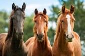 Konjeniško društvo Slovenske gorice ohranja tradicijo konjeništva tudi letos