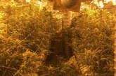 V Mariboru osumljenemu zasegli 759 sadik konoplje