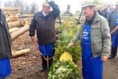 Na Cvetno nedeljo postavitev enega večjih presmecev v Voličini
