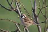 V Benediktu si prizadevajo za ohranitev ogroženih ptic