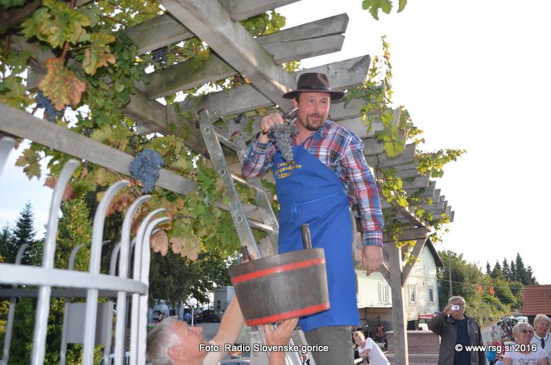 Vinogradniki, redno spremljajte dozorevanje grozdja!