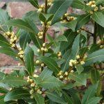 O prezimovanju sredozemskih rastlin