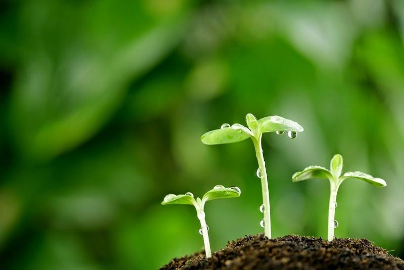 V Lenartu predavanje o lastni vzgoji sadik