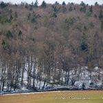21. marec velja za mednarodni dan gozdov