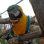 Tradicionalna razstava malih živali ponovno v Evroparku