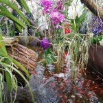 FOTO: Razstava orhidej z živimi tropskimi metulji v Meleh pri Gornji Radgoni podaljšana do 25. marca