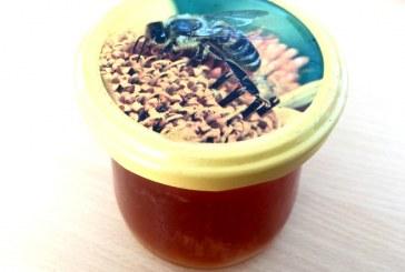 V Maribor prihaja festival medu
