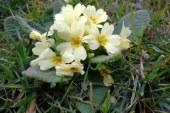 Pomlad se prebuja tudi v Turističnem društvo Selnica ob Dravi
