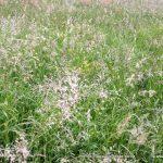 Ne samo da kmetje zamujajo s košnjo, veliko travnikov ima tudi neustrezno botanično sestavo travinja