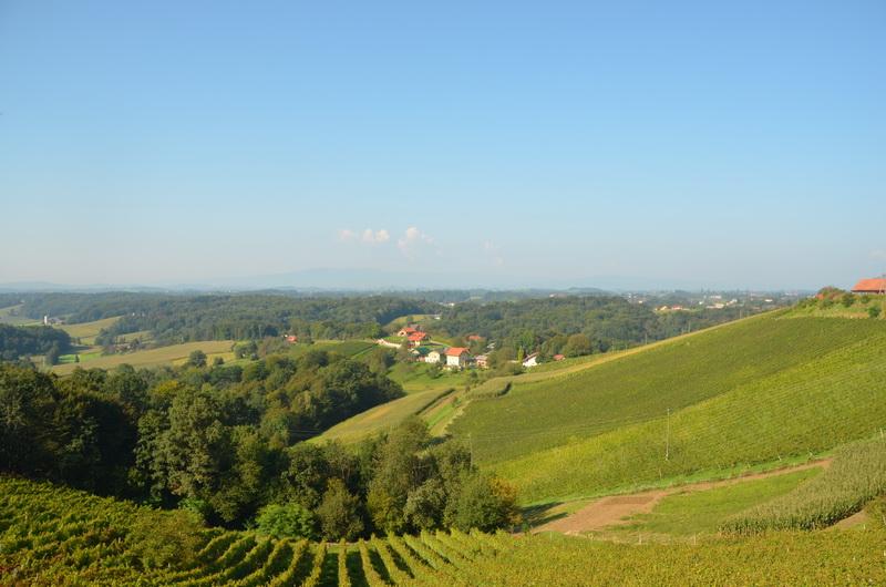 Anovski vinogradniki z obširnim programom dela