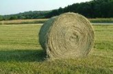 Društvo kmečkih žena Sveti Jurij tudi letos pripravilo Šaljive kmečke igre