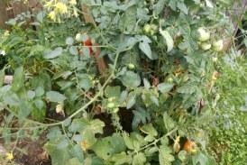 Povpraševanje po sezonskih delavcih v kmetijstvu na višku