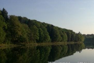 Akcija pogozdovanja tudi na območju Lovrenca na Pohorju