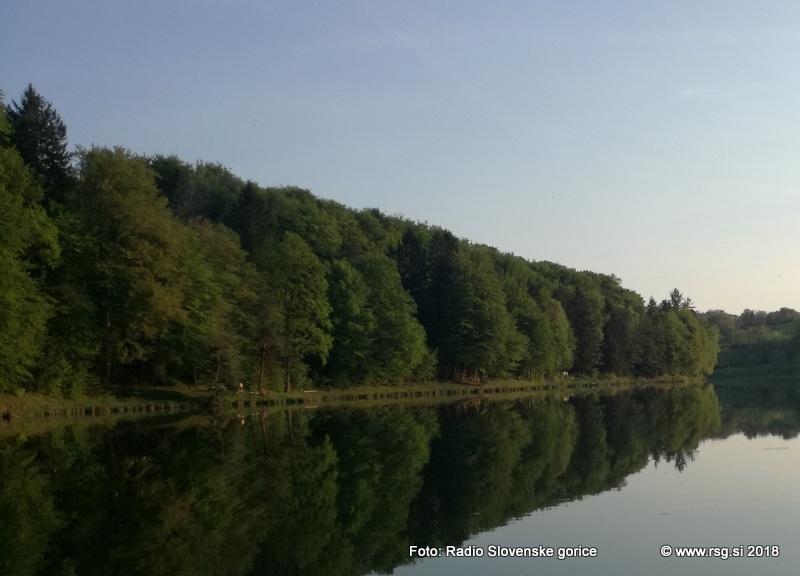 Stanje gozdov v Sloveniji relativno dobro