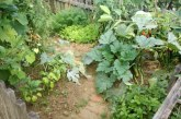 Kako vrtnariti na mokri in neogreti zemlji
