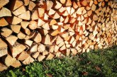Pri spravilu lesa v gozdu še vedno potrebujemo odločbo o poseku