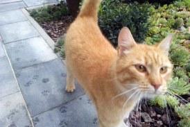V Zavetišču za živali v Mariboru začasno ustavili sprejem mačk