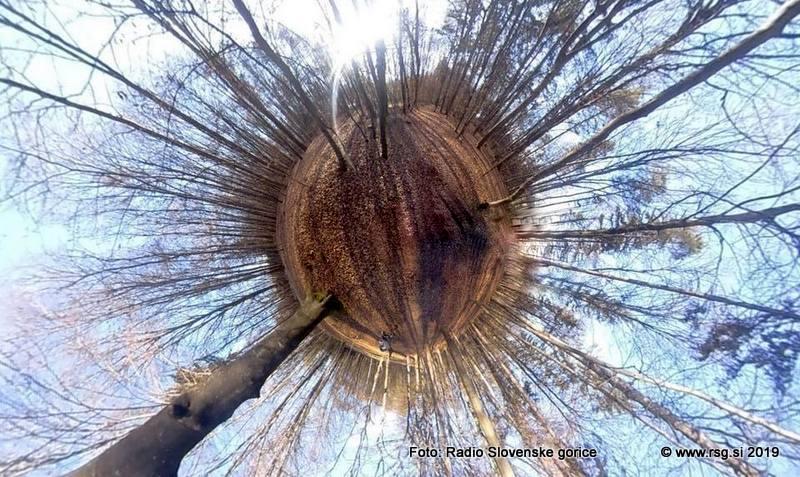 Podlubniki so tudi v naših gozdovih