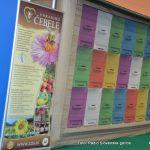 Nedelja v Gornji Radgoni v znamenju čebelarjev, gozda, kmetijske tehnike in podeželske mladine