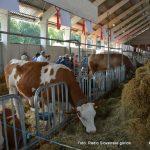 Ponedeljek na Agri bo v znamenju gastronomije, govedorejcev, živilcev in veterinarjev