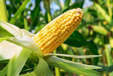 Zaradi ukrepov za omejitev širjenja koronavirusa je do nadaljnjega ukinjenja kampanja kmetijskih subvencij