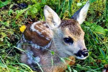Tudi v Sloveniji imamo ogrožene živalske vrste