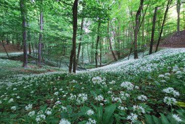 Letošnji teden gozdov izpostavlja skrb in upoštevanje bontona